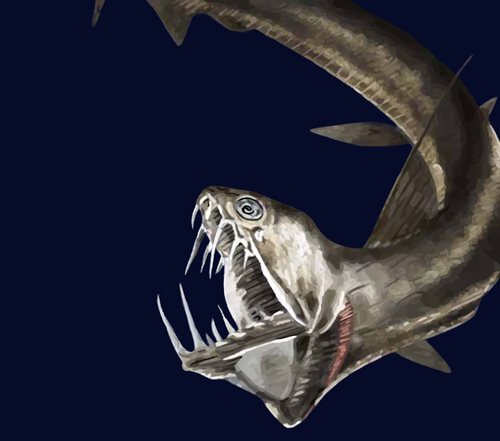 Aggressive Viperfish wallpaper