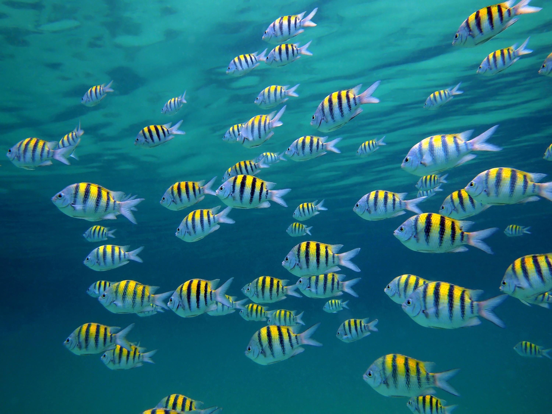 Большое кол-во рыб фото