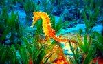Bright Seahorse