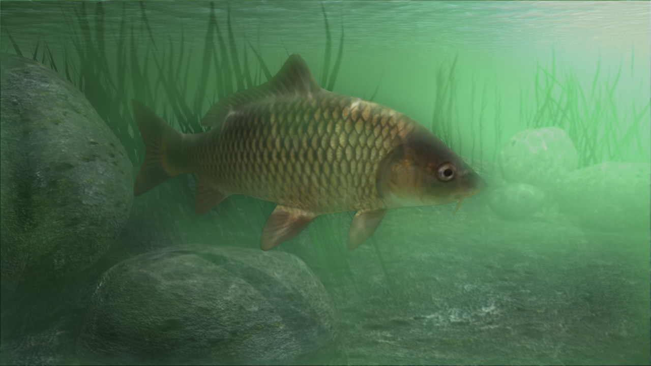 Arp in the shallows photo and wallpaper cute arp in the - Carp fishing wallpaper hd ...
