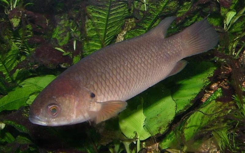 Рыба на дне фото