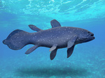 Coelacanth in ocean