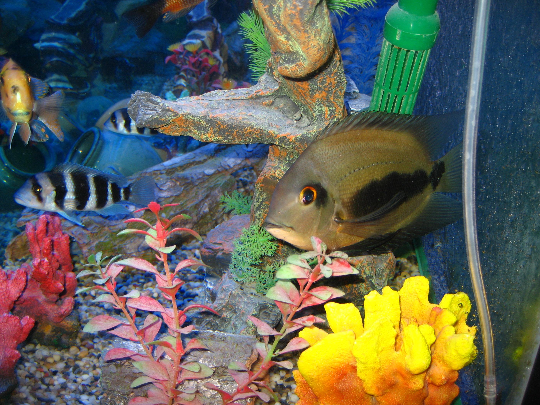 Красочная рыба Уару фото