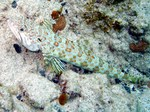 Cute Sand diver