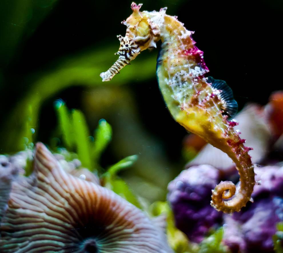 Cute Seahorse wallpaper