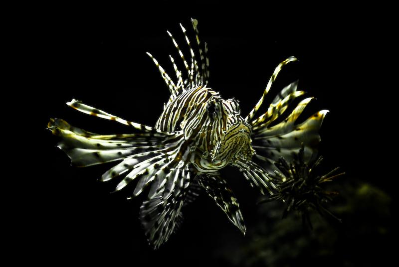 Dragonfish in the dark depths wallpaper