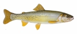 Drawing Yellowfin cutthroat trout