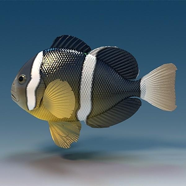 Нарисованная Рыба-клоун фото
