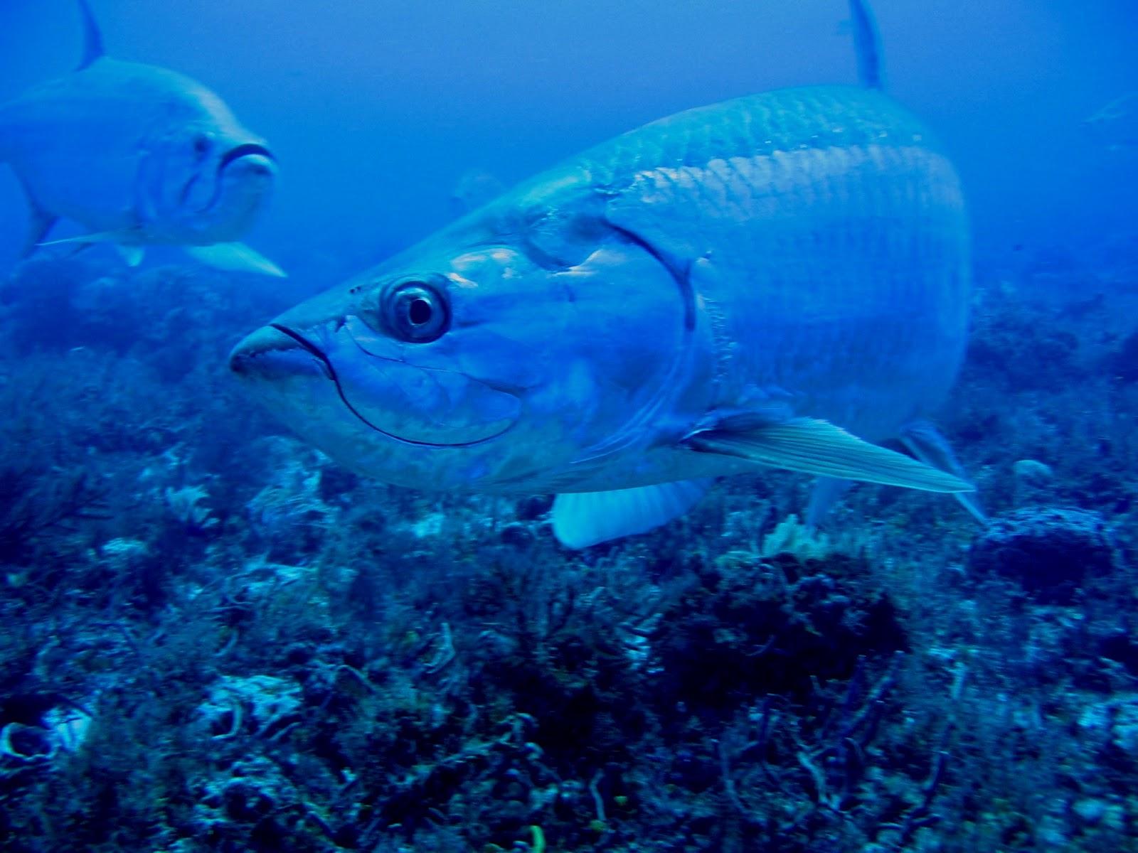 Вечернее фото рыб-единорогов фото