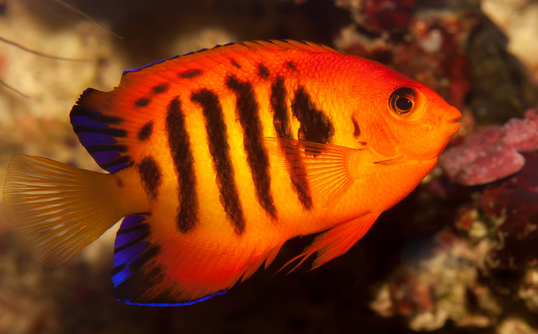 сельдь фото рыба