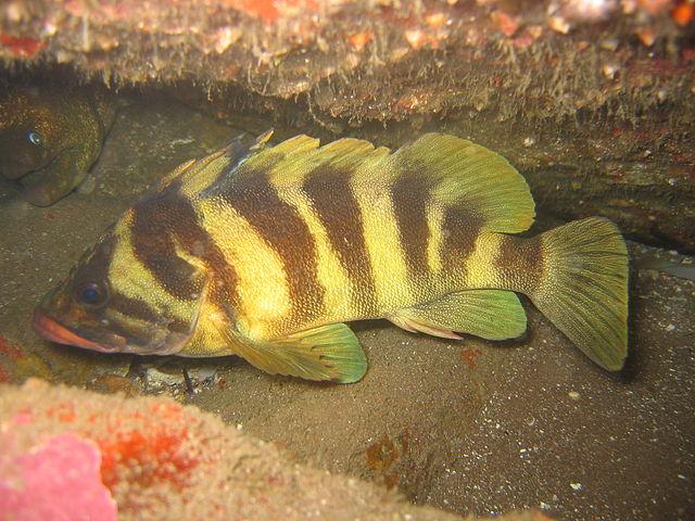 Floating Treefish wallpaper