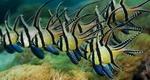 Flock cardinalfishes
