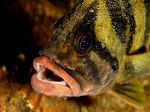 Funny Treefish face