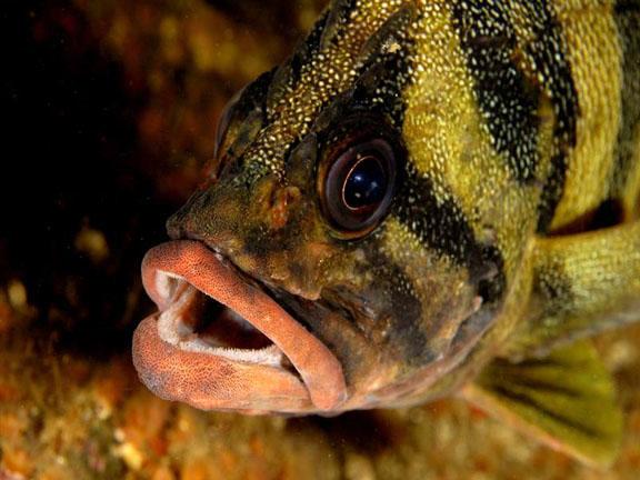 Funny Treefish face wallpaper