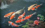 Koi fishes on the surface