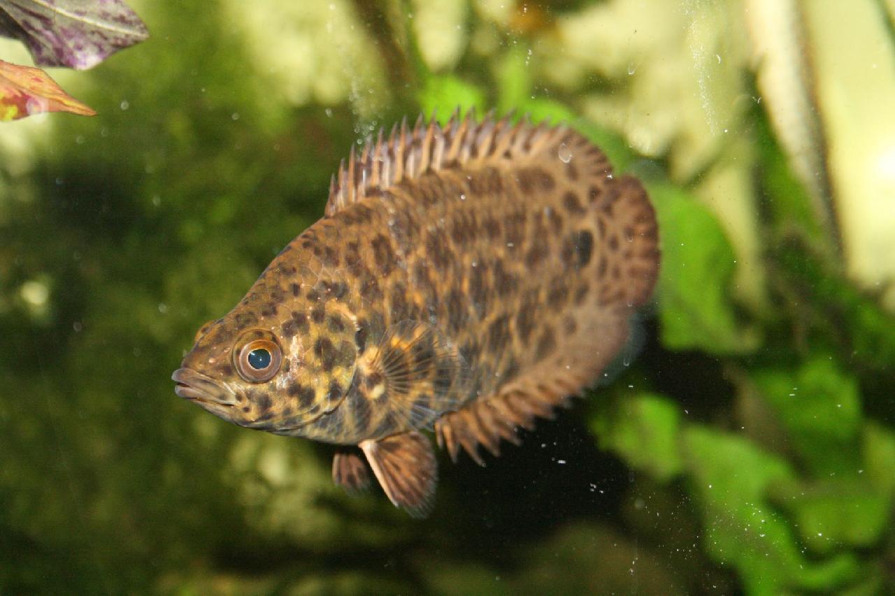 Рыба-листок в траве фото