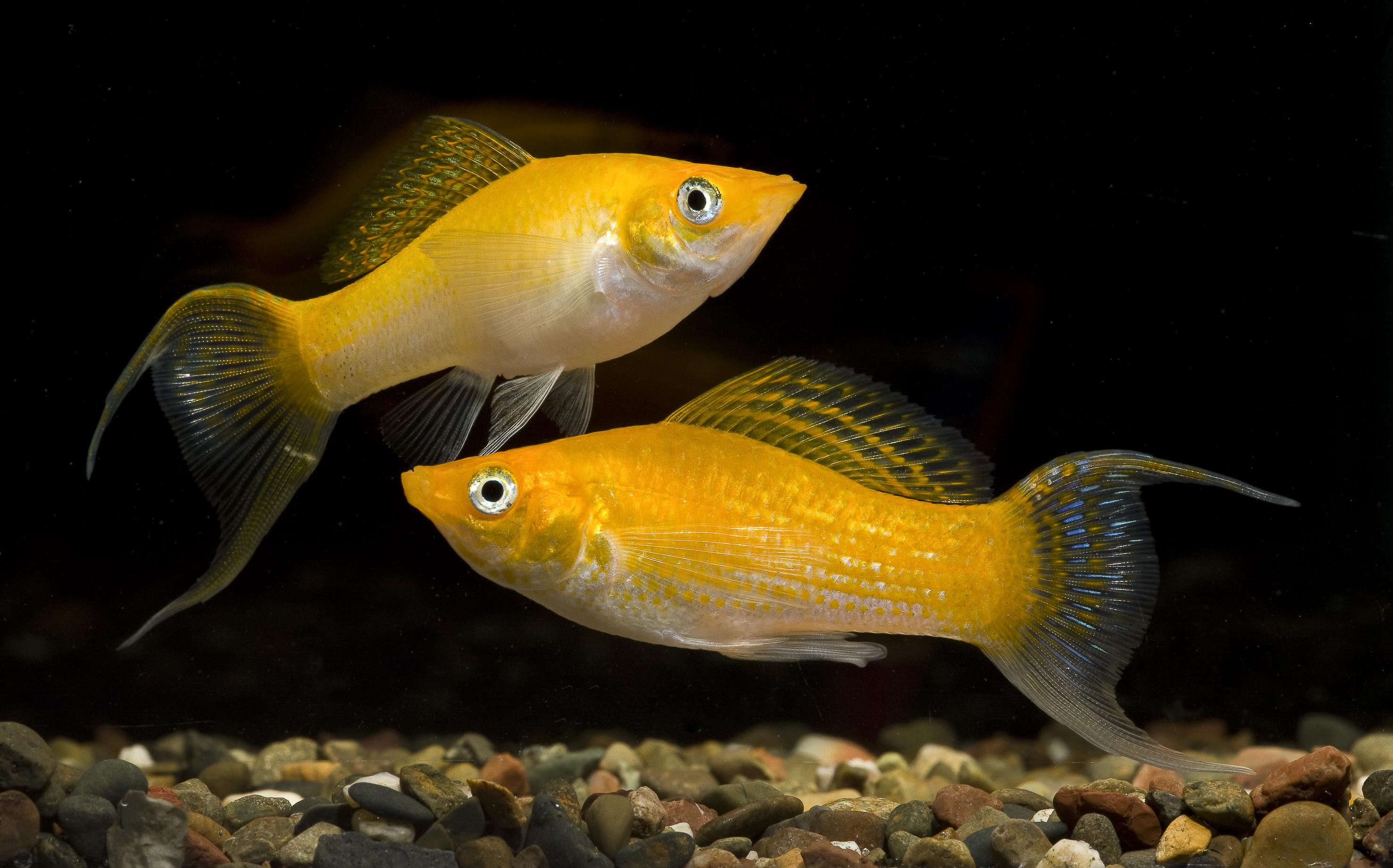 Аквариумные рыбки виды и уход