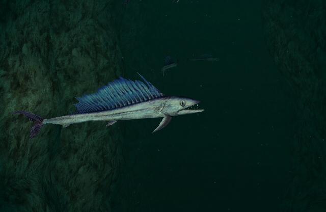Longnose lancetfish swims photo and wallpaper. Cute Longnose ...