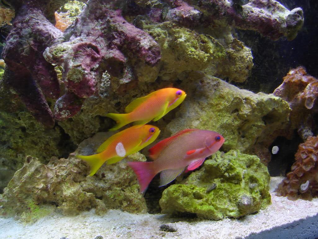 Рыбки плывут фото