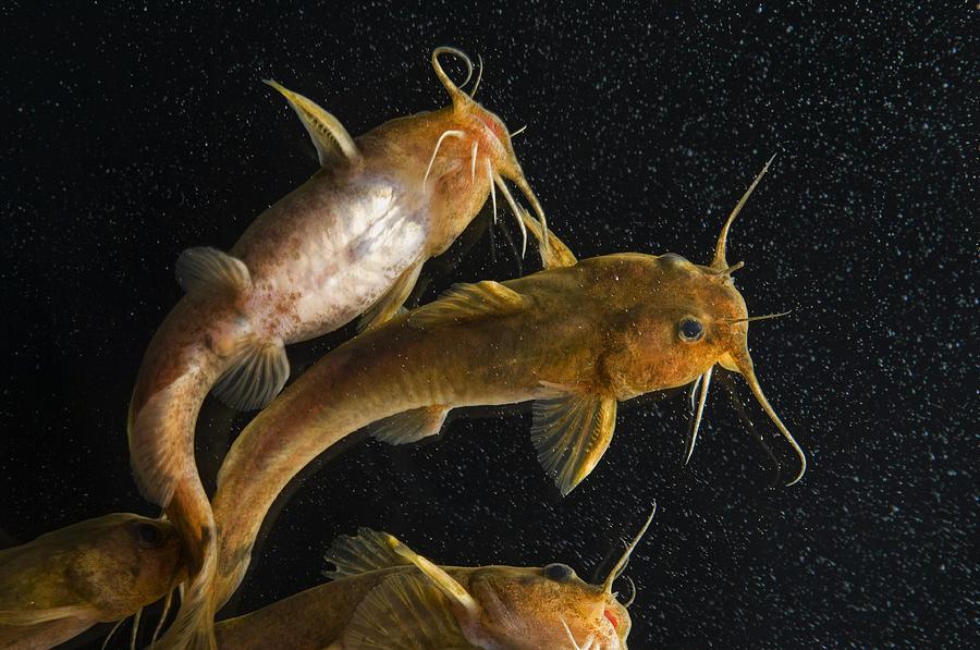 Madtoms swims wallpaper