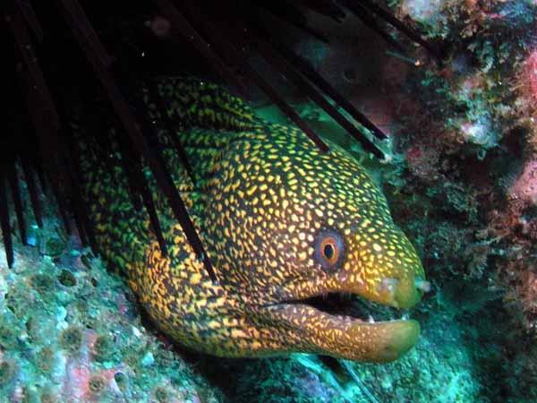 Moray eel lurking wallpaper