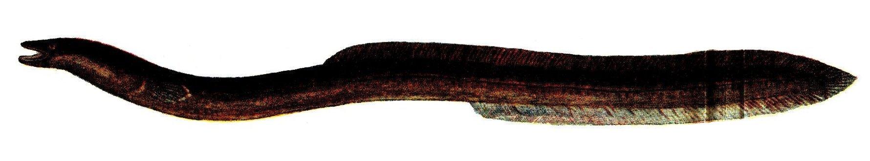 Mustard eel wallpaper