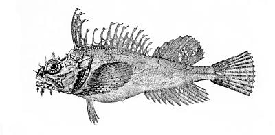 Rough sculpin wallpaper