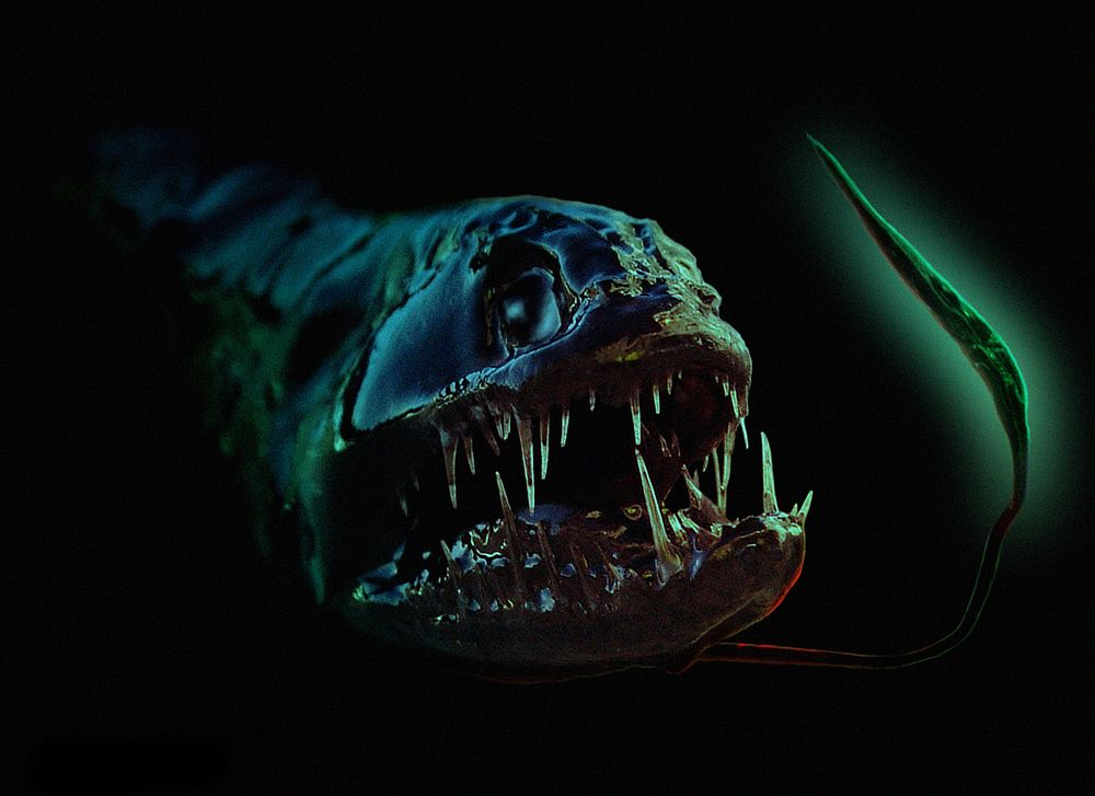 Scaly dragonfish face wallpaper