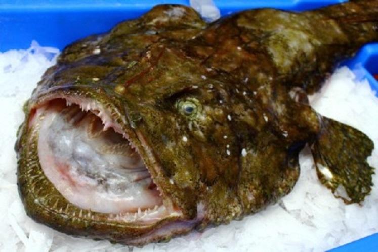 Scary monkfish wallpaper