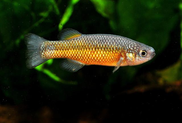 Портрет слепоглазковой рыбы фото