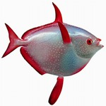 Sunfish (opah) portrait
