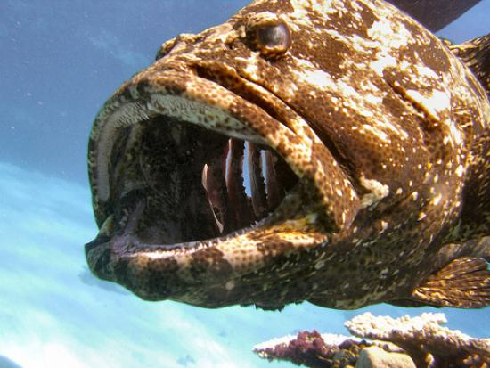 Изовая рыба в воде фото