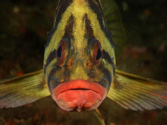 Treefish looking at you wallpaper