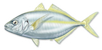 Trevally drawing