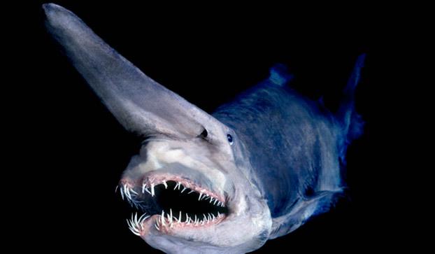Мерзкая акула-домовой фото
