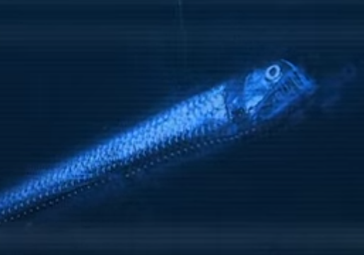 Viperfish wallpaper