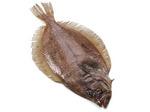 Whiff fish