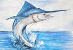 White marlin fish