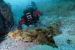 Wobbegong and diver