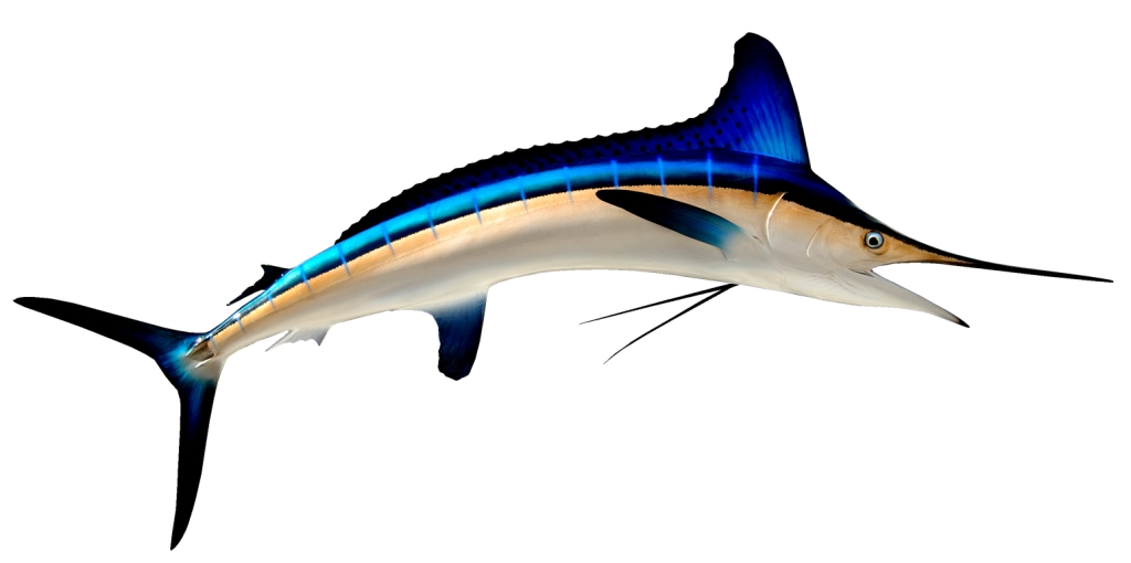 Write Billfish wallpaper