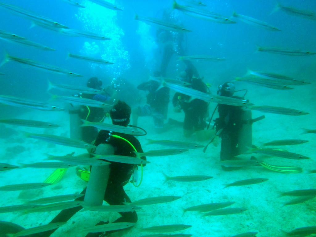 Yellowtail barracuda among the people wallpaper